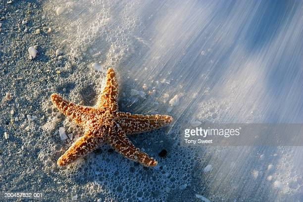 Surf washing away from beached starfish (blurred motion)