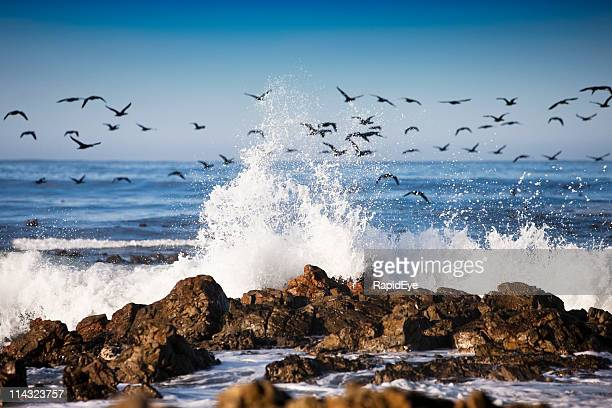 Surf with migrating cormorants