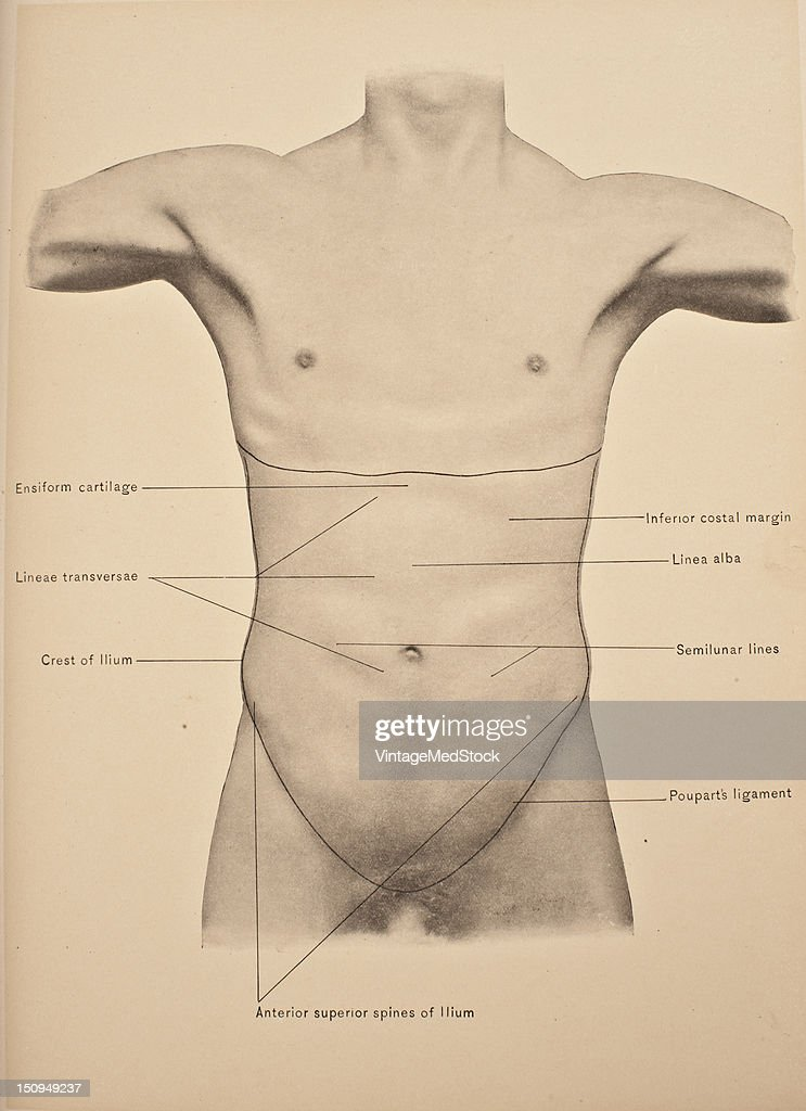 Surface anatomy of the abdomen wall, 1903. From \'Surgical Anatomy ...