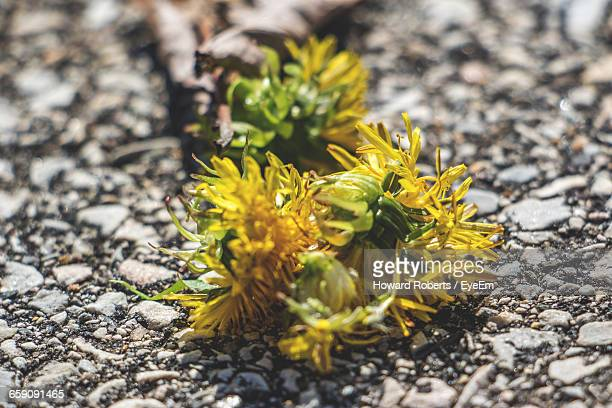 surface level of flowers on ground - howard,_wisconsin stock pictures, royalty-free photos & images