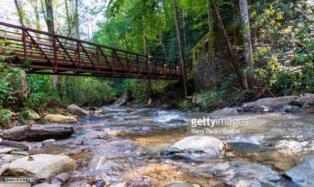 surface level of footbridge over river in forest - barry wood stock pictures, royalty-free photos & images