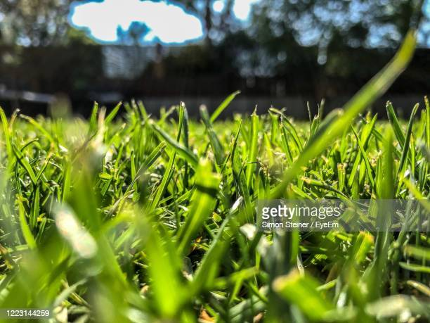 surface level of grass on field - bad homburg stock pictures, royalty-free photos & images