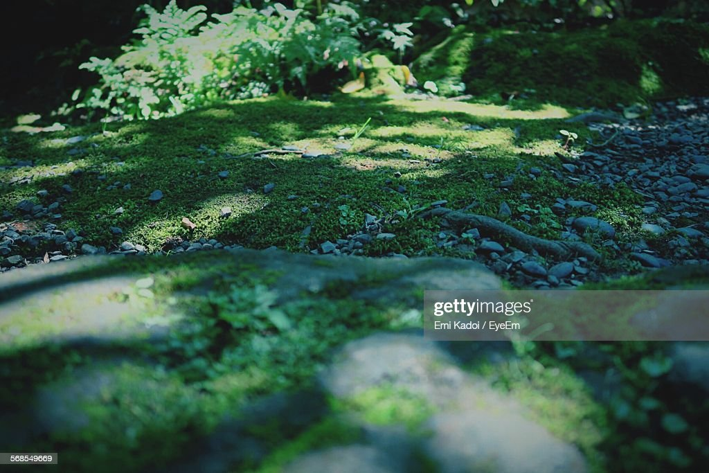 Surface Level Of Moss Covered Stone In Forest : Stock Photo