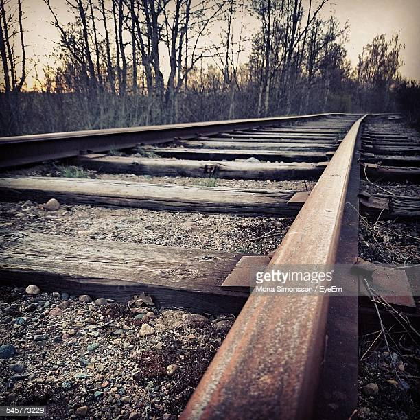 Surface Level Of Railway Tracks Against Trees