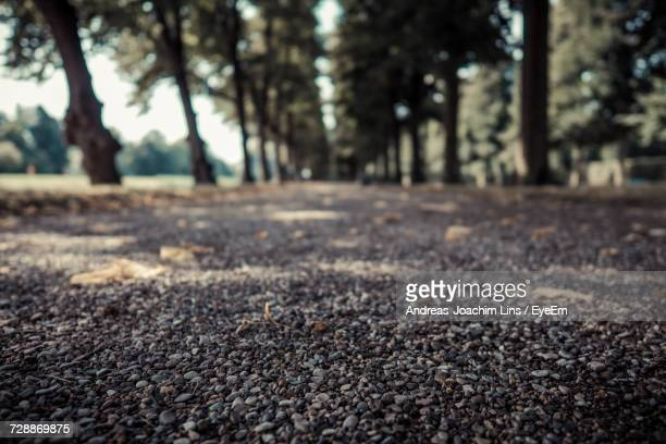 Surface Level Of Road Against Trees In Forest