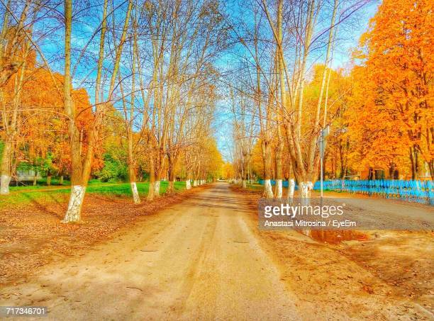 surface level of road along bare trees in park - anastasi foto e immagini stock