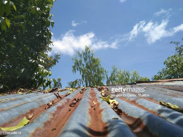 surface level of road amidst trees against sky - siesta key stock pictures, royalty-free photos & images