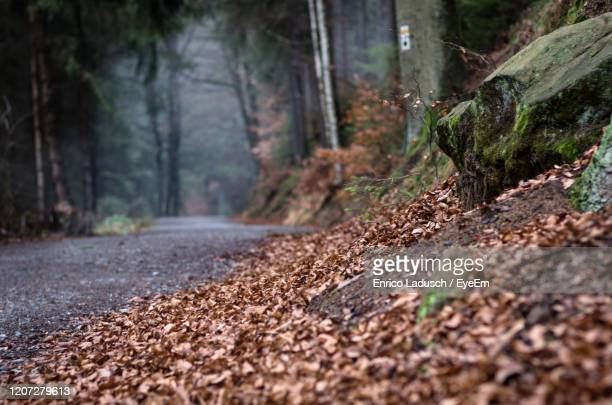 surface level of road amidst trees in forest - saxony stock pictures, royalty-free photos & images