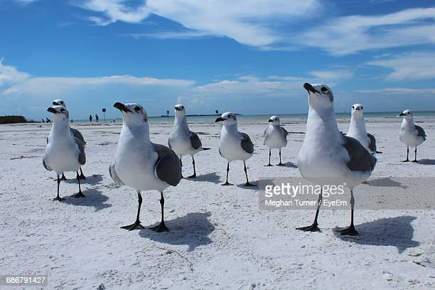 Surface Level Of Seagulls At The Beach