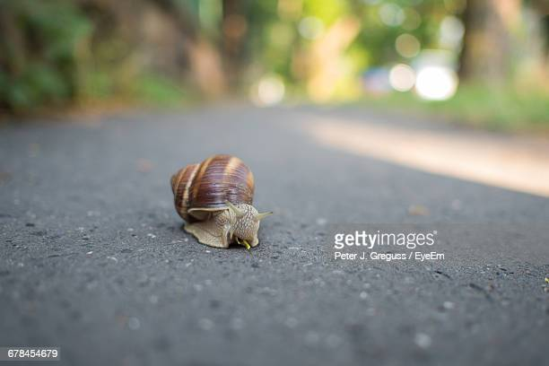 Surface Level Of Snail On Ground