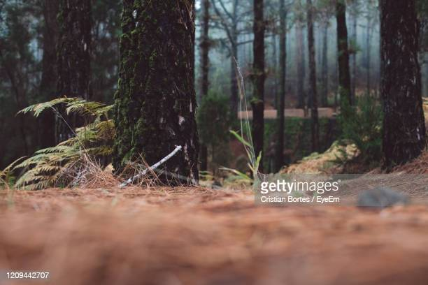 surface level of trees in forest - bortes stock pictures, royalty-free photos & images