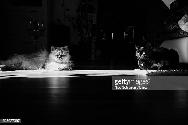 Surface level of two cats resting on floor