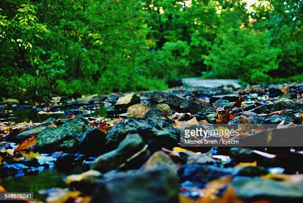Surface Level On Rocks On Field In Forest