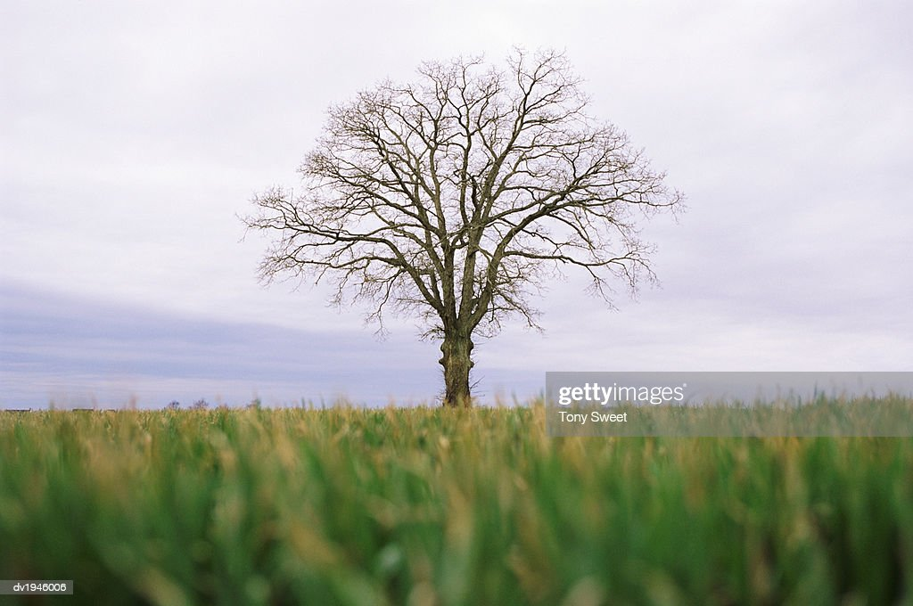Surface Level View in a Field of a Tree With Bare Branches : Stock Photo