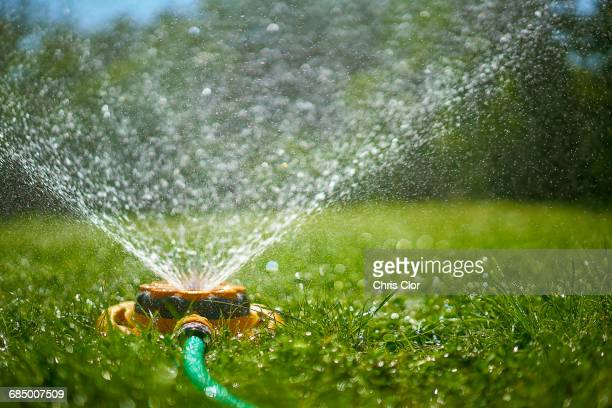 surface level view of backyard sprinkler spraying - watering stock pictures, royalty-free photos & images