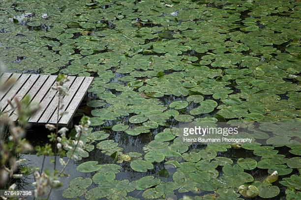 surface of lily pond with wooden dock - heinz baumann photography stock-fotos und bilder