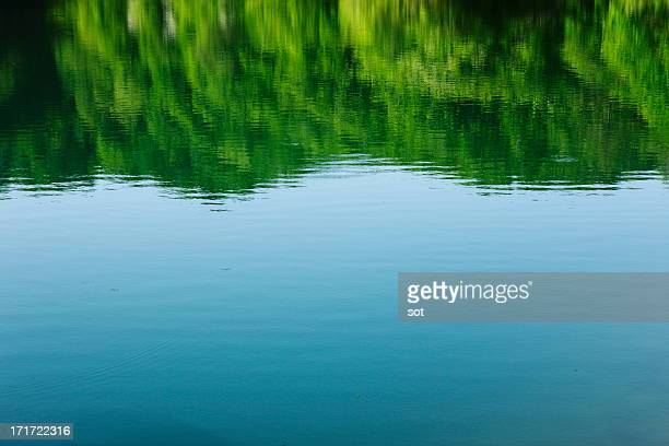 surface of the lake in forest - 入り江 ストックフォトと画像