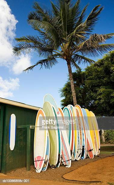 Surfboards lined up on rack