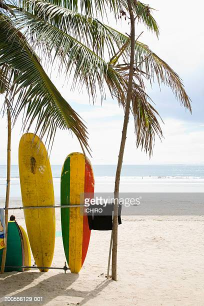 Surfboards on beach under palm tree