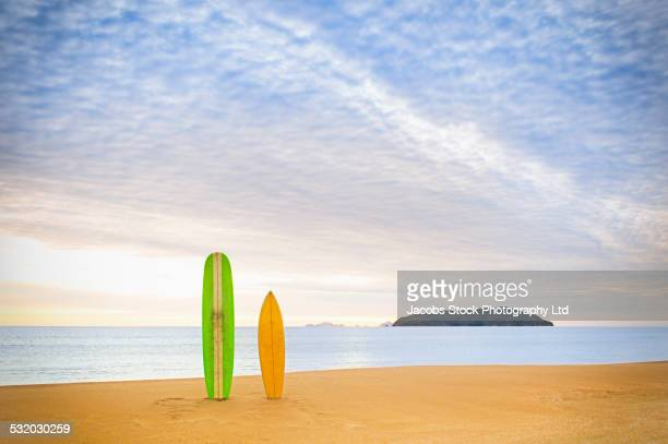 surfboards upright on beach - northland new zealand stock pictures, royalty-free photos & images