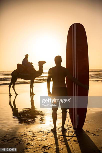 Surfer and camel on beach, Taghazout, Morocco