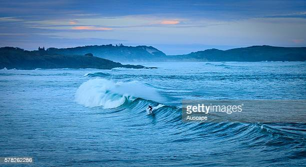 Surfer catching a wave at dusk Emerald Beach Coffs Harbor New South Wales Australia
