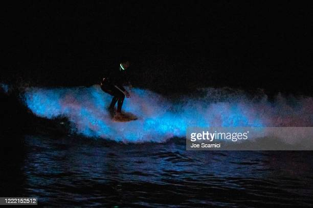 A surfer rides on a bioluminescent wave at the San Clemente pier on April 30 2020 in San Diego California