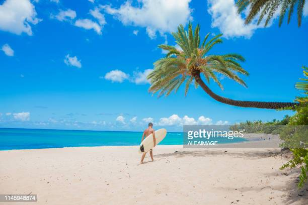 surfer walking on the beach - waimea bay hawaii stock photos and pictures