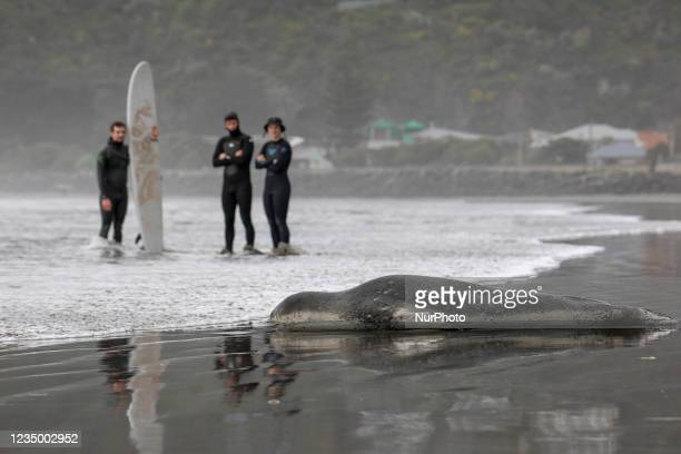 Surfers look at a leopard seal on Sumner beach in Christchurch, New Zealand on September 02, 2021. Leopard seals are usually found on Antarctic pack...