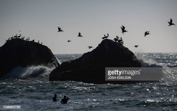 Surfers wait for their set as birds take flight at Martin's Beach in Half Moon Bay California on September 19 2018 Billionaire Vinod Khosla purchased...