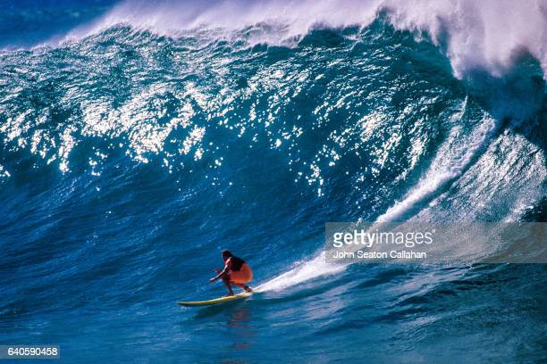 surfing at waimea bay - waimea bay stock photos and pictures
