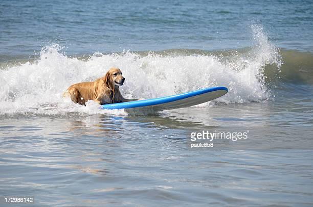 Cão de Surf