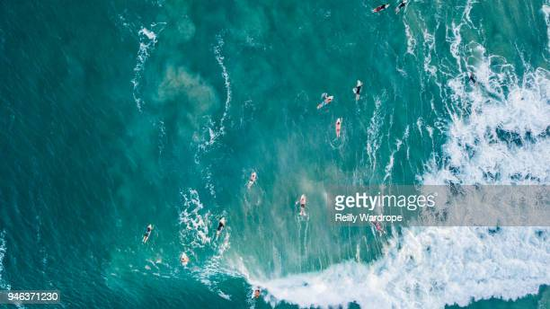 surfing - gold coast queensland stock pictures, royalty-free photos & images