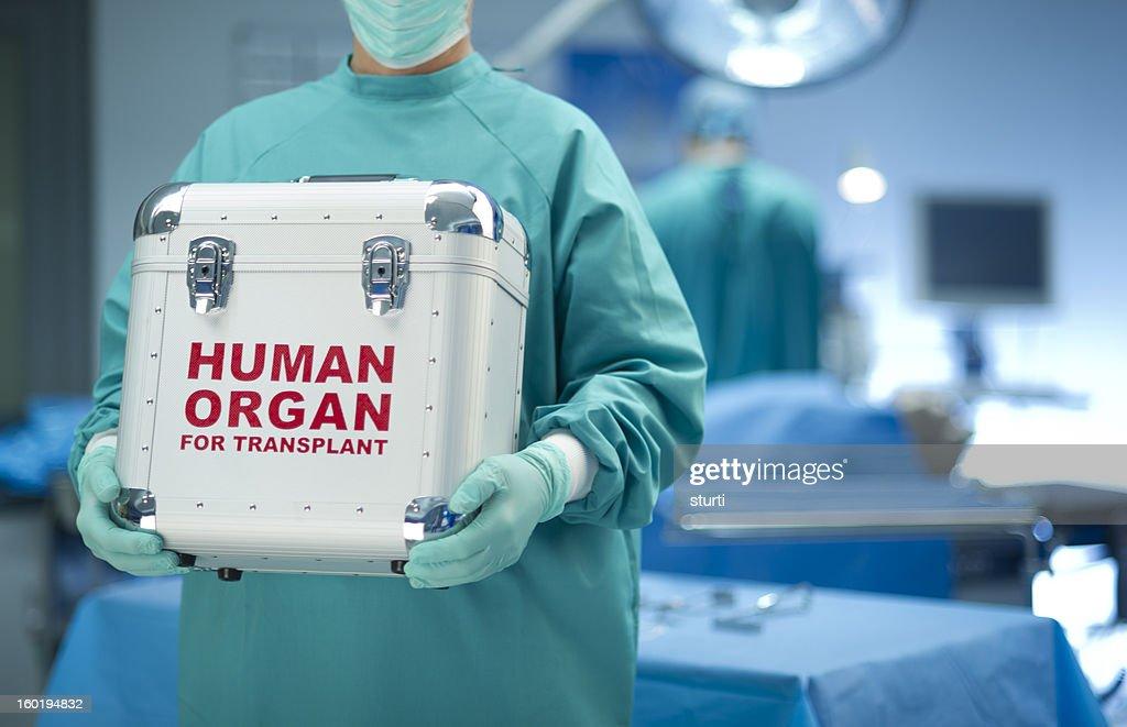 Surgeon with organ donation : Stock Photo