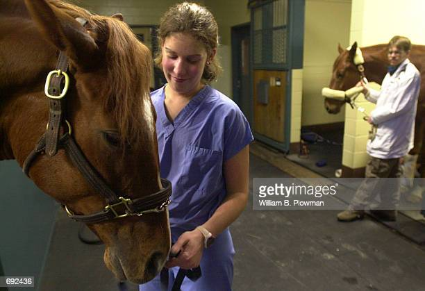 Surgical veterinary technician Amy Gregoire pets a threeyearold thoroughbred racehorse after successful surgery to treat a stress fracture at the...