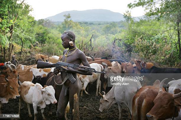 Suri tribal boy with AK-47 herds cattle