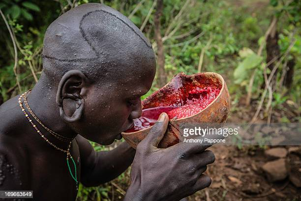Suri tribes boys are collecting the blood of a cow in a calabash the vein of the animal was opened with a bow and an arrow. Like most pastoralists...