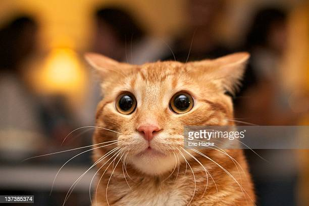 surprised cat - animal whisker stock pictures, royalty-free photos & images