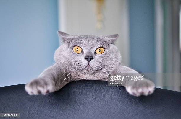 surprised cat - animal head stock pictures, royalty-free photos & images