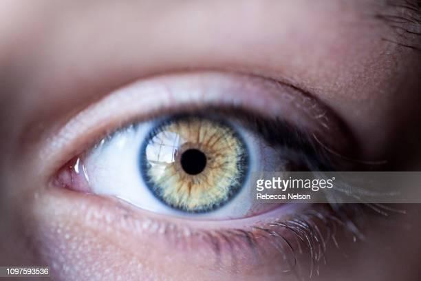 surprised hazel eye with thick eyelashes - occhi nocciola foto e immagini stock