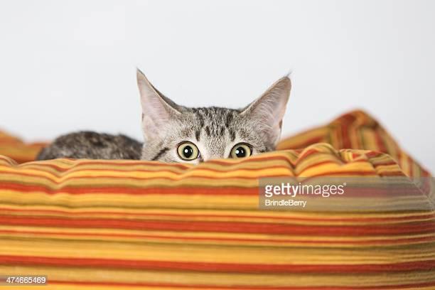 Surprised Kitten Hiding in Striped Orange Bed