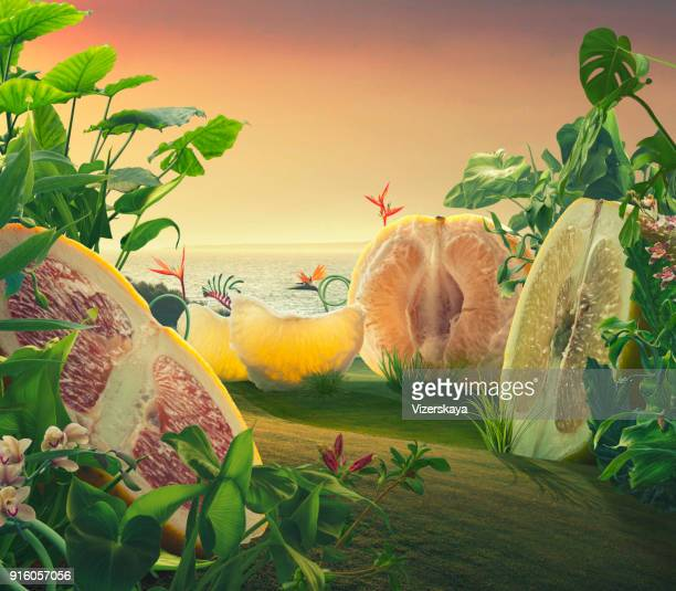 surreal giant grapefruits on a field - paranormal stock pictures, royalty-free photos & images