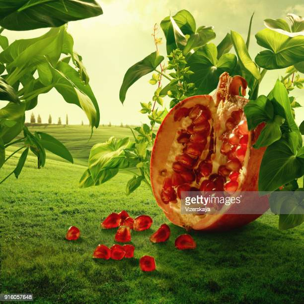 surreal giant pomegranate in nature - pomegranate stock pictures, royalty-free photos & images