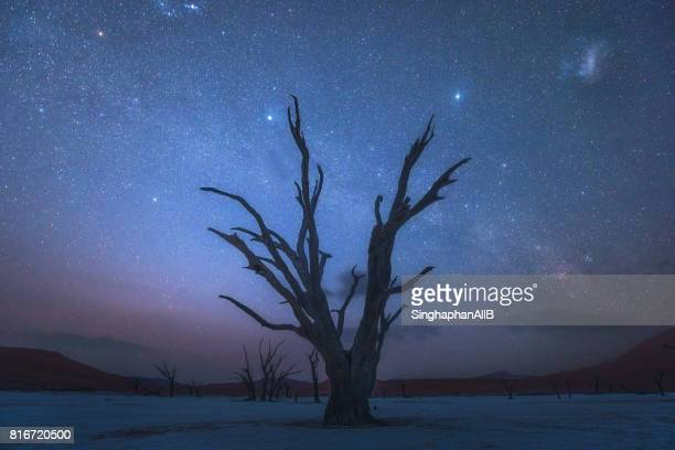 Surreal landscape of Deadvlei, Sossusvlei in Namibia at night with stars and milkyway in the sky