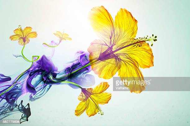 Surreal liquid flowers composition