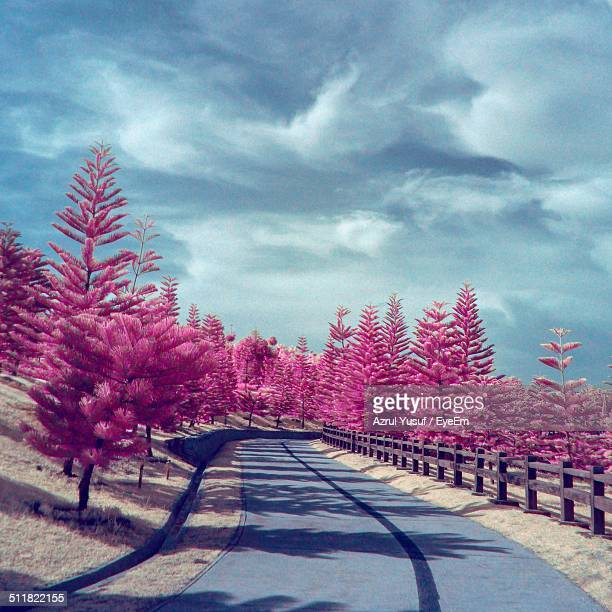 Surreal nature scenery with pink trees
