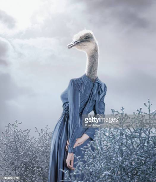 surreal portrait of ostrich girl - surreal stock pictures, royalty-free photos & images