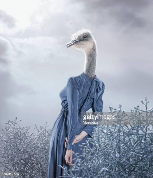 Portrait surréaliste d'autruche