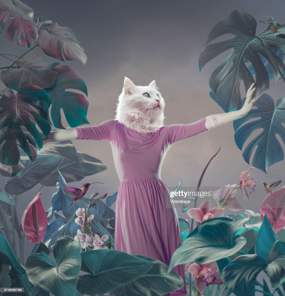 Surreal portrait of white cat : Stock Photo