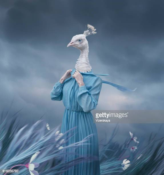 surreal portrait of white peacock - artistic product stock photos and pictures